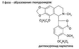 Образование глюкуронидов