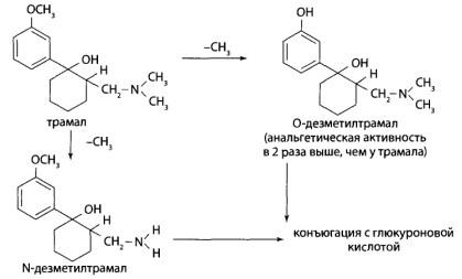 Во второй фазе проходит конъюгация гидроксильных производных с глюкуроновой или серной кислотами