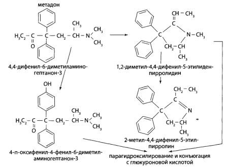 Неконьюгированные соединения составляют 75% введенной дозы