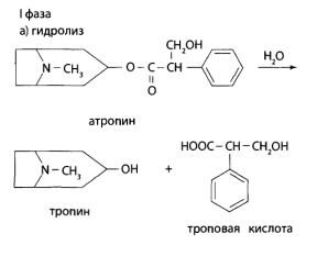 Скополамин в печени подвергается гидролизу до спирта скопина и троповой кислоты