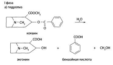 В I фазе метаболизма проходит гидролиз с образованием бензоилэкгонина, а затем экгонина и бензойной кислоты и деметилирование с образованием норкокаина