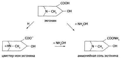 Соли экгонина нерастворимы в хлороформе, поэтому в процессе экстракции они не извлекаются