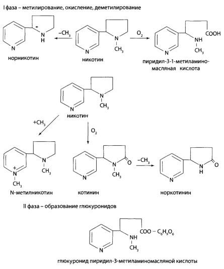 В I фазе метаболизма никотин подвергается метилированию