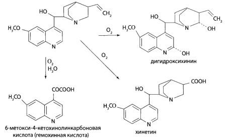 Пути метаболизма хинина