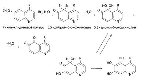 Вначале происходит окисление и галогенирование хинолинового кольца