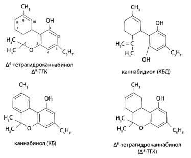 Основными каннабиноидами являются 5 соединений